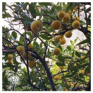 Naranjas y Vitamina C I